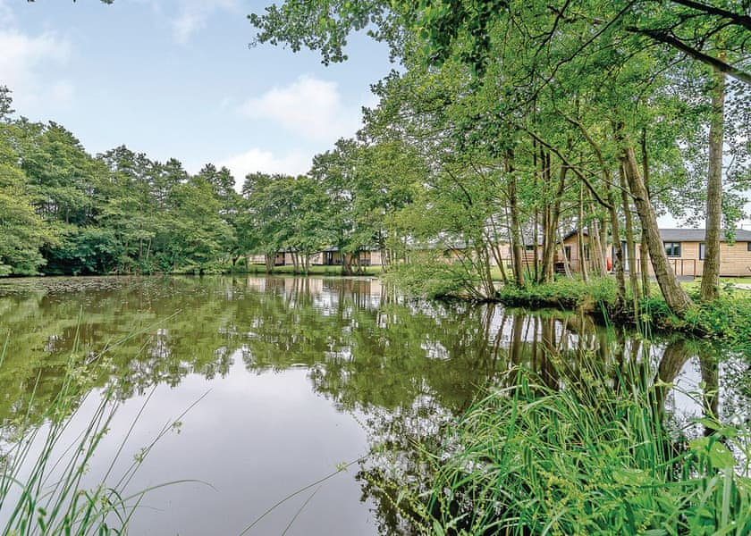 Warren Wood Country Park, Pevensey,,England